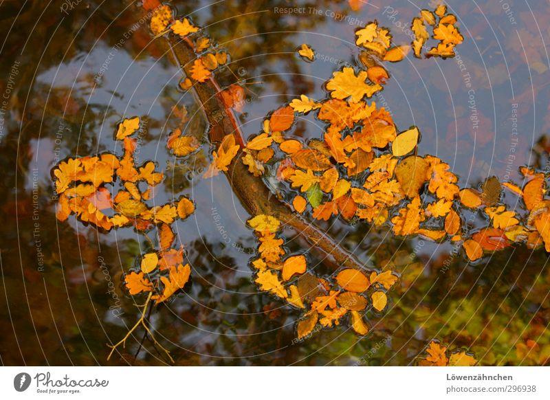 Über Auf und Unter Natur Pflanze Wasser Wolkenloser Himmel Herbst Schönes Wetter Blatt Teich fallen Schwimmen & Baden nass natürlich schön blau braun gelb