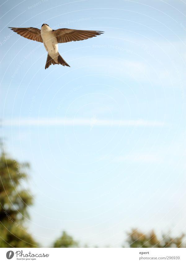 Fly away with me Luft Himmel Schönes Wetter Tier Vogel Flügel 1 Bewegung fliegen frei Unendlichkeit oben schön Reinheit Hoffnung Sehnsucht elegant Freiheit
