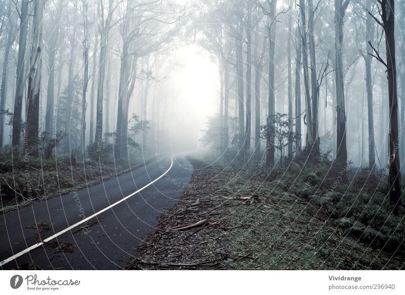 Natur blau Ferien & Urlaub & Reisen grün Sommer Pflanze Baum Einsamkeit Landschaft Blatt Wald Umwelt Straße Herbst Wege & Pfade grau