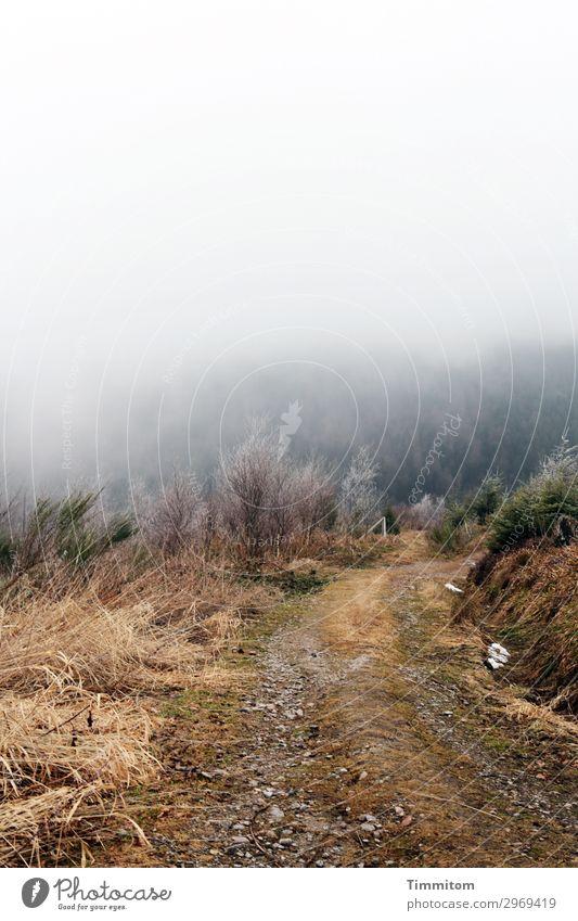 Frostiger Weg Himmel Ferien & Urlaub & Reisen Natur weiß Landschaft Baum Wald Winter Berge u. Gebirge Umwelt kalt Wege & Pfade Gefühle Gras braun Eis