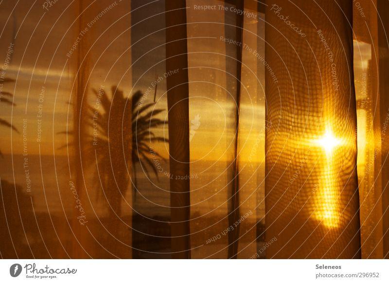 im guten Glauben Häusliches Leben Wohnung Raum Umwelt Natur Himmel Pflanze Baum Linie hell Gefühle Hoffnung Christliches Kreuz Palmenwedel Gardine Farbfoto