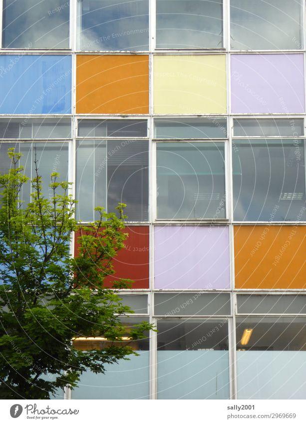 Unsere Stadt soll bunter werden... Baum Haus Hochhaus Gebäude Bürogebäude Plattenbau Fenster Arbeit & Erwerbstätigkeit alt dreckig hässlich kaputt trashig