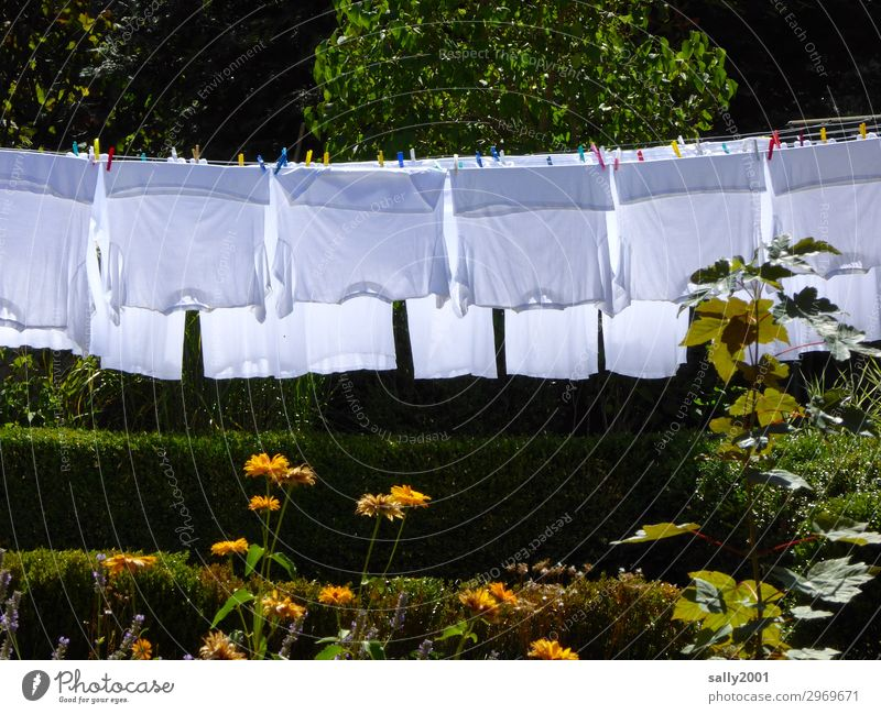 Weißwaschtag... Sommer Baum Blume Garten Bekleidung T-Shirt Hemd Unterhemd hängen trocknen Wäsche waschen Waschtag aufhängen Wäscheklammern Außenaufnahme weiß