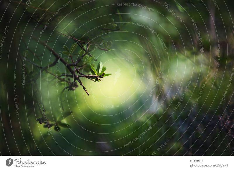 Dschungel Natur grün Baum Blatt Wald dunkel natürlich Zweig positiv Lichtschein Lichteinfall lichtvoll Lichtblick