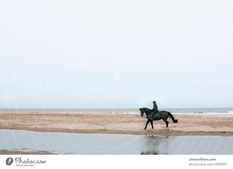 reiter Mensch Natur Ferien & Urlaub & Reisen Wasser Meer Landschaft Tier Strand Ferne Freiheit Küste Sand Luft Wellen Insel Tourismus