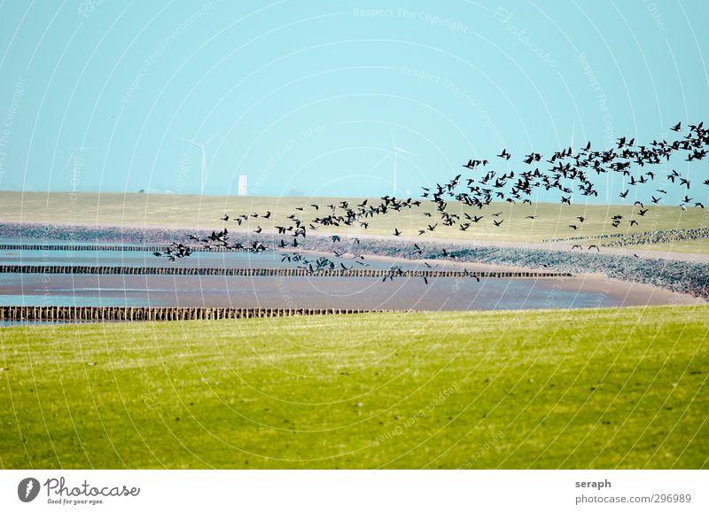 Wattenmeer Landschaft Strand Umwelt Küste Vogel Wildtier Nordsee Windkraftanlage Etage Gans Schwarm Ornithologie Zugvogel Hausgans Sandbank