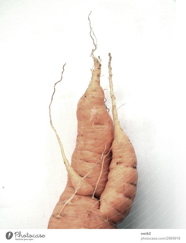 Vermöhrung Möhre frisch Gesundheit Zusammensein lecker wild orange bizarr Design Wurzel skurril Wildwuchs knackig Vitamin Gesunde Ernährung Vegane Ernährung