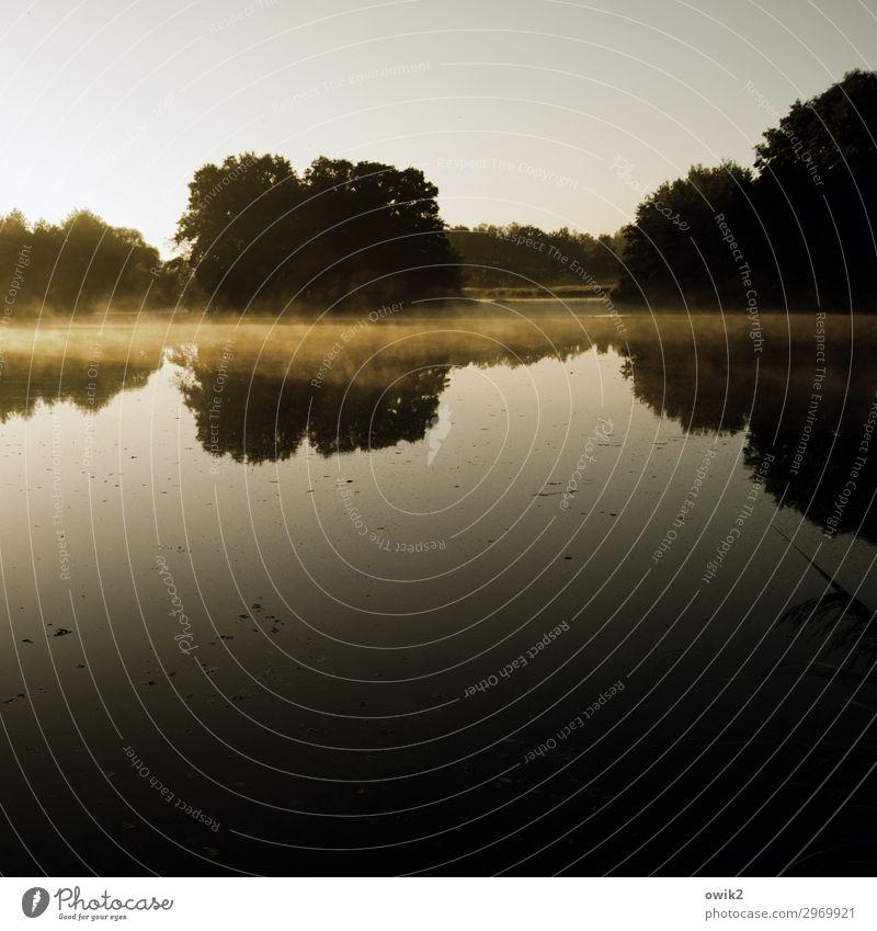 Morgens im Spiegel Umwelt Natur Landschaft Wolkenloser Himmel Horizont Herbst Schönes Wetter Nebel Baum Wald Insel Teich Gelassenheit geduldig Idylle Ferne