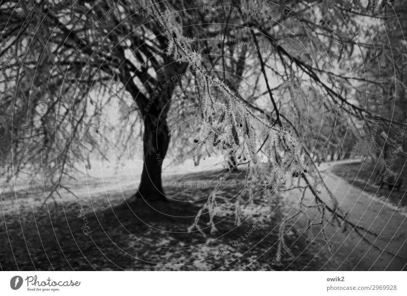 Vereist Umwelt Natur Landschaft Pflanze Winter Schönes Wetter Baum Gras Zweige u. Äste Eiskristall Wege & Pfade dunkel kalt Schwarzweißfoto Außenaufnahme