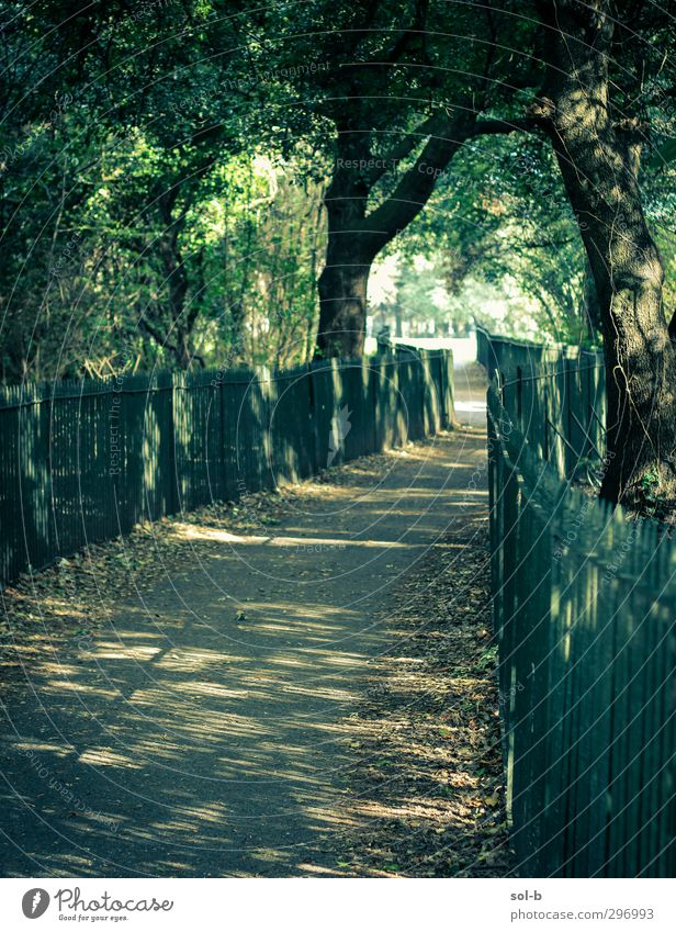 Durchgang Natur Baum Sträucher Park Dublin Republik Irland Wege & Pfade Gesundheit natürlich grün träumen Ziel Zukunft Blatt Lichtfleck Öffnung Spaziergang