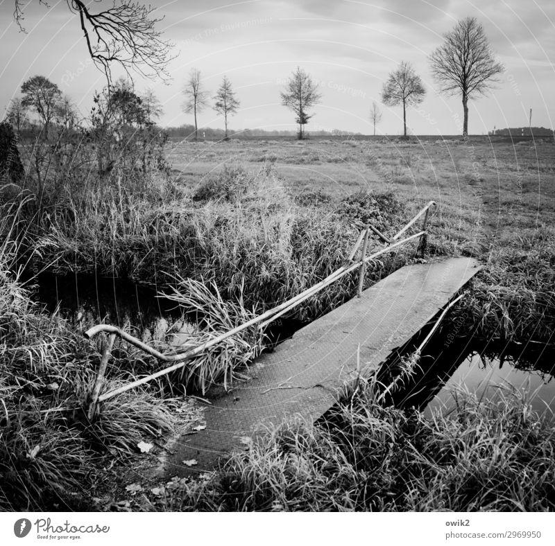 Provisorisch Umwelt Natur Landschaft Pflanze Himmel Wolken Horizont Herbst Schönes Wetter Baum Gras Sträucher Feld Bach Brücke trist grau geduldig ruhig