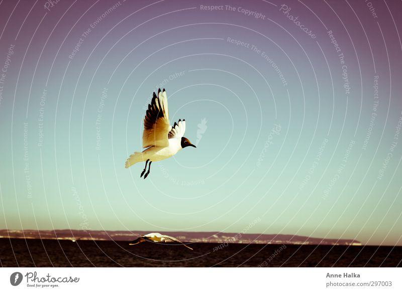 An den Horizont gepinnt Himmel Natur blau weiß Sommer Tier ruhig Strand schwarz Leben Frühling oben Küste Horizont Vogel fliegen