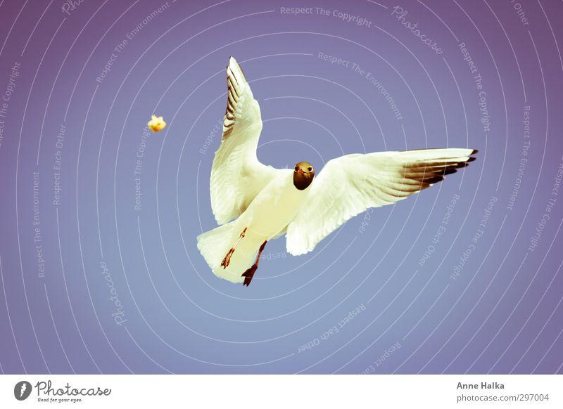 Es liegt was in der Luft blau Himmel (Jenseits) weiß Meer ruhig Tier Ferne Küste grau Freiheit fliegen Vogel Horizont frei Ernährung Flügel