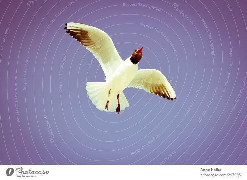 Es liegt was in der Luft - 2 blau weiß Erholung rot ruhig Tier Ferne Küste Horizont träumen Vogel Fliege Flugzeug Flügel Sehnsucht Ostsee