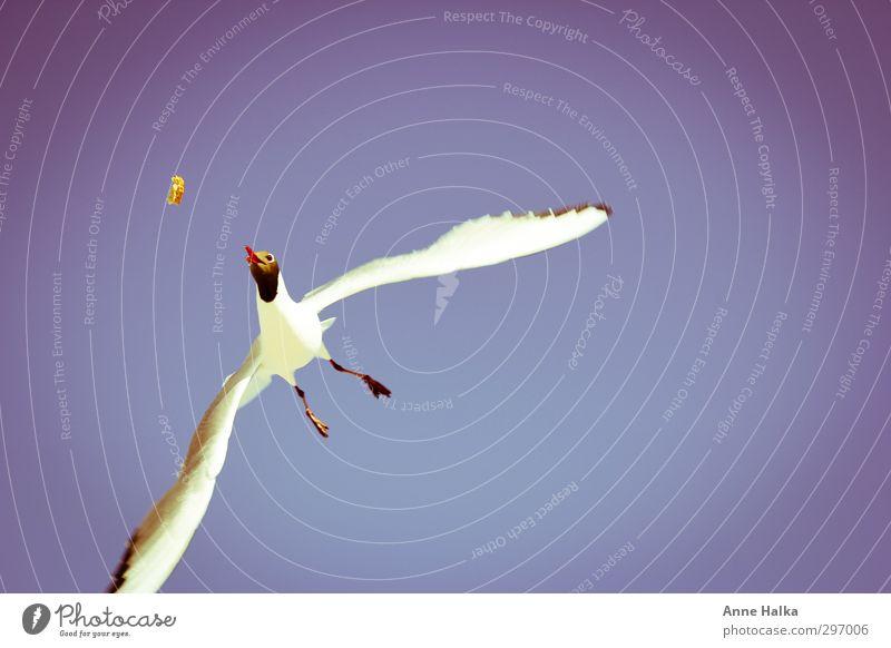 Es liegt was in der Luft - 3 Ferien & Urlaub & Reisen blau Himmel (Jenseits) Meer Erholung rot Ferne fliegen Vogel Horizont träumen Ostsee Appetit & Hunger