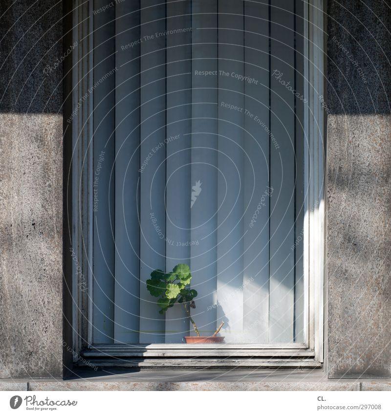 pflanze grün Pflanze Blume Haus Fenster Wand Mauer grau Büro Ordnung Häusliches Leben Dekoration & Verzierung trist Sauberkeit Vorhang Langeweile