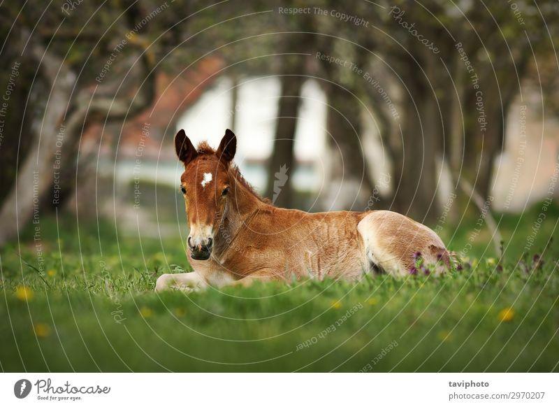 Natur Sommer schön grün Landschaft Tier Einsamkeit natürlich Wiese Glück Gras braun stehen Baby niedlich Pferd