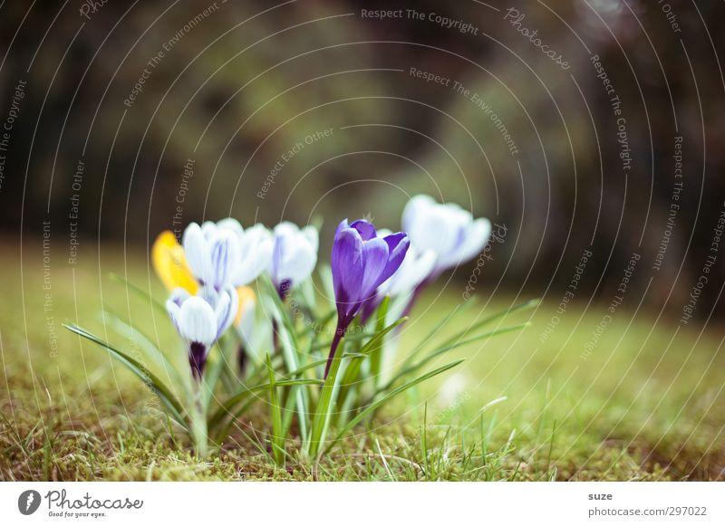 Küsschen Natur Pflanze schön grün Blume gelb Wiese Frühling Blüte natürlich Garten Wachstum leuchten authentisch Blühend Wandel & Veränderung