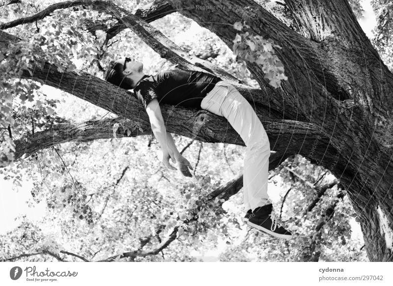 Abhängen Mensch Natur Jugendliche Sommer Baum Erholung Erwachsene Umwelt Junger Mann Leben Frühling Freiheit 18-30 Jahre Gesundheit träumen liegen