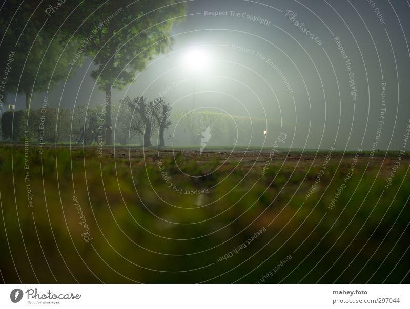 vernebelt Natur grün Baum Einsamkeit ruhig dunkel Gefühle grau hell braun Stimmung Angst Nebel Idylle bedrohlich Hoffnung