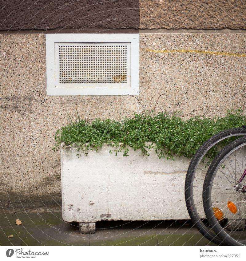 grüner versuch. Fahrradtour Wohnung Haus Keller Sport Fitness Sport-Training Fahrradfahren Pflanze Blume Grünpflanze Stadt Mauer Wand Fassade Kellerfenster