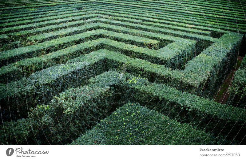 irrer Garten Pflanze Grünpflanze grün Verzweiflung Irritation Labyrinth Irrgarten entdecken Park Sträucher Sehenswürdigkeit Suche Natur verloren