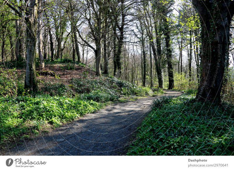 Himmel Natur Pflanze grün Landschaft Baum Blatt Wald Holz natürlich Wege & Pfade Gras Stein braun wandern Park