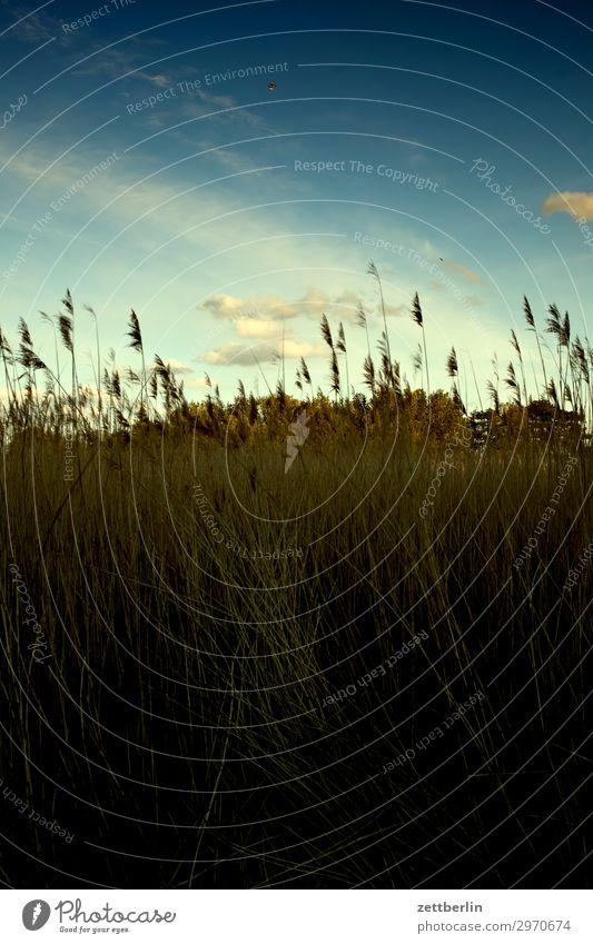 Himmel und Wiese Ferien & Urlaub & Reisen Insel Küste Mecklenburg-Vorpommern mönchgut Natur Rügen Tourismus Himmel (Jenseits) Wolken Weide Gras Halm