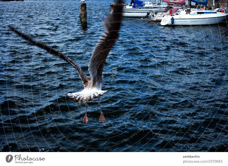 Abflug Ferien & Urlaub & Reisen Insel Küste Mecklenburg-Vorpommern Meer mönchgut Natur Ostsee Ostseeinsel Reisefotografie Rügen Seeufer Vogel Möwe Rückansicht