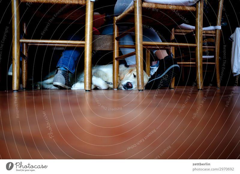 Hund Tier ruhig Innenarchitektur Textfreiraum Raum liegen sitzen warten schlafen Stuhl Gastronomie Haustier geduldig Kneipe Rassehund