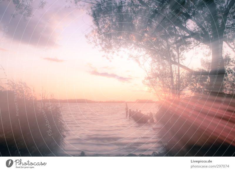 Seenplatte Kunst Umwelt Natur Landschaft Pflanze Wasser Himmel Wolken Sonne Sonnenaufgang Sonnenuntergang Sonnenlicht Sommer Wetter Schönes Wetter Baum