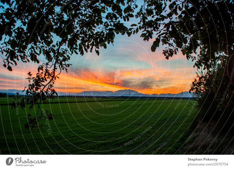 Sonnenuntergang mit Silhouette eines Baumes als Rahmen Ferne Sommer Umwelt Natur Landschaft Pflanze Erde Himmel Wolken Horizont Sonnenaufgang Herbst