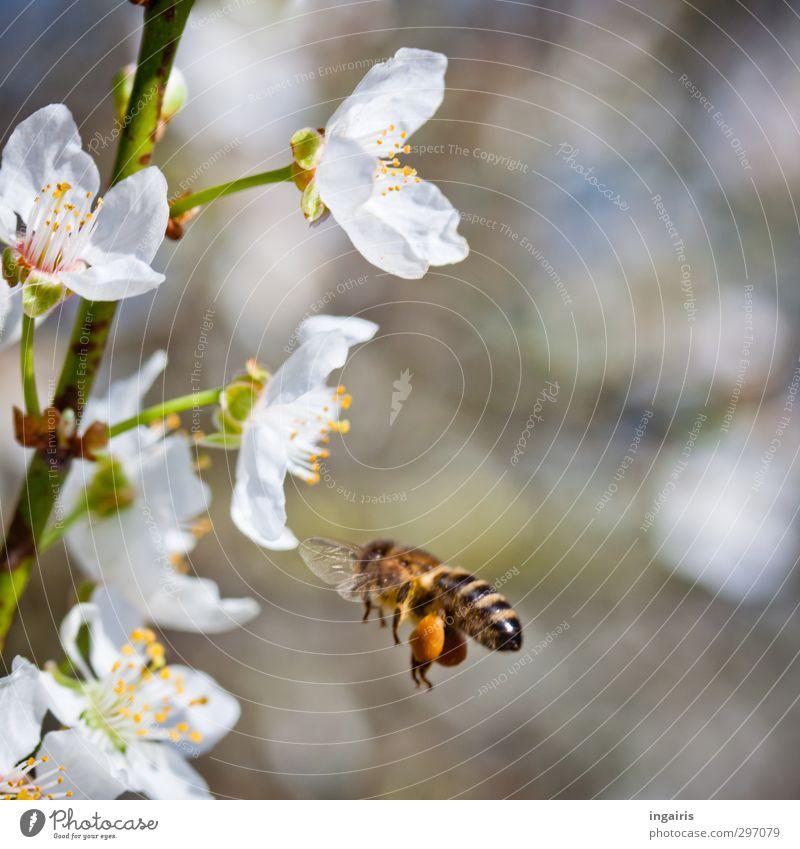 Süßes zum Frühling Natur Pflanze Baum Tier Leben Bewegung Blüte Gesunde Ernährung Garten natürlich Stimmung Arbeit & Erwerbstätigkeit fliegen leuchten Idylle