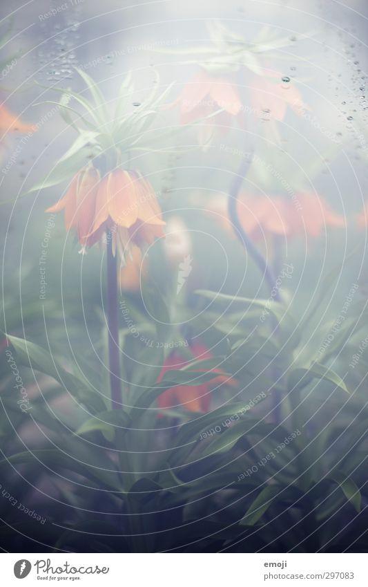 dahingehaucht Natur grün Pflanze Blume Umwelt Frühling natürlich feucht exotisch Wasserdampf Gewächshaus