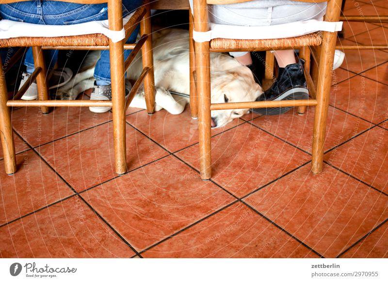 Hund ruhig Textfreiraum Raum liegen sitzen warten schlafen Stuhl Gastronomie geduldig Kneipe Golden Retriever