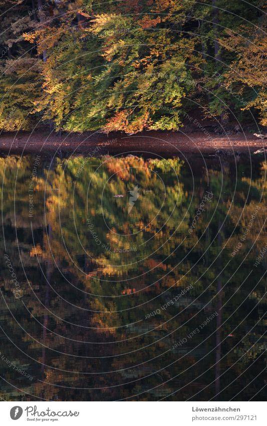Waldimsee Natur grün Pflanze Baum Farbe Einsamkeit Landschaft Blatt ruhig Erholung Wald gelb Herbst Traurigkeit See natürlich