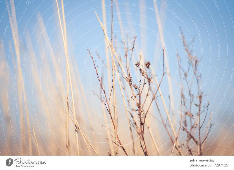 an der frischen luft . zwei Himmel Natur blau Pflanze ruhig Erholung Umwelt Ferne Wärme Frühling Küste Luft natürlich orange Schönes Wetter