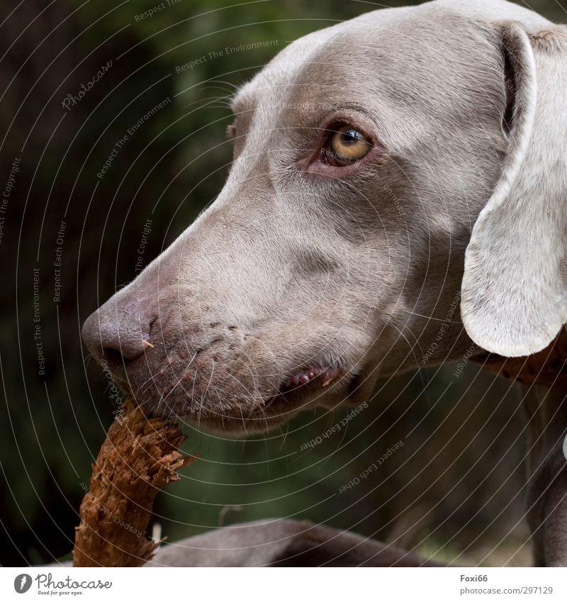 natürlicher Kautrieb Hund grün Freude Tier Wald Spielen Bewegung Holz Glück braun wild Zufriedenheit niedlich beobachten Ast Lebensfreude