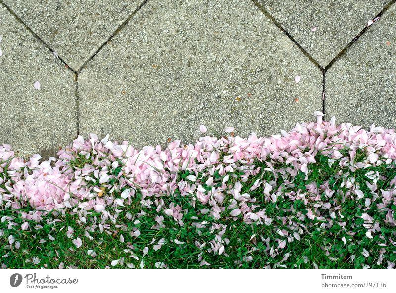 Kulisse. Natur grün Pflanze Umwelt Gras Wege & Pfade grau Blüte Stein liegen rosa ästhetisch zart Duft leicht Blütenblatt