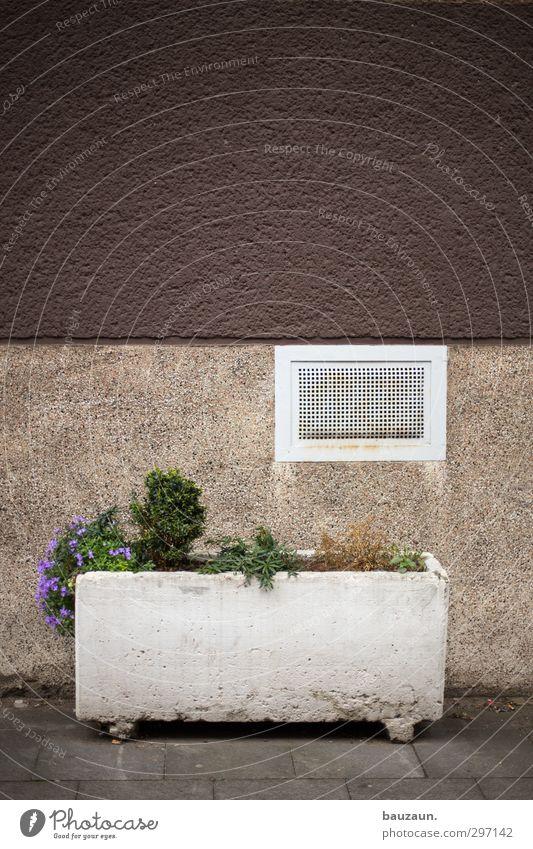 lila versuch. grün Stadt weiß Pflanze Blume Haus Umwelt Fenster Wand Wege & Pfade Mauer Stein Garten Metall braun Fassade