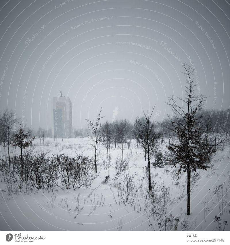 Kühlakku Umwelt Natur Landschaft Himmel Horizont Winter Klima Wetter Eis Frost Schnee Pflanze Baum Sträucher Stadtrand Haus Hochhaus Gebäude Plattenbau
