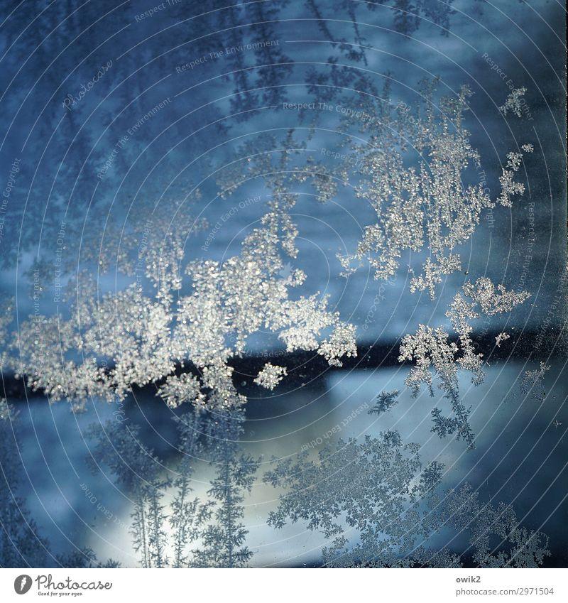 Eisblümchen Winter Frost Glas kalt nah blau Eisblumen Eiskristall Farbfoto Außenaufnahme Nahaufnahme Detailaufnahme abstrakt Muster Strukturen & Formen