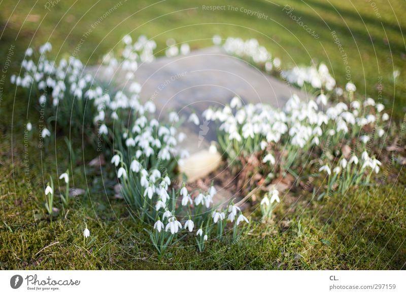 grab Natur Pflanze Erde Frühling Blume Gras Blüte Park Wiese Blühend verblüht Traurigkeit Trauer Tod Religion & Glaube ruhig Schmerz Trennung Verfall