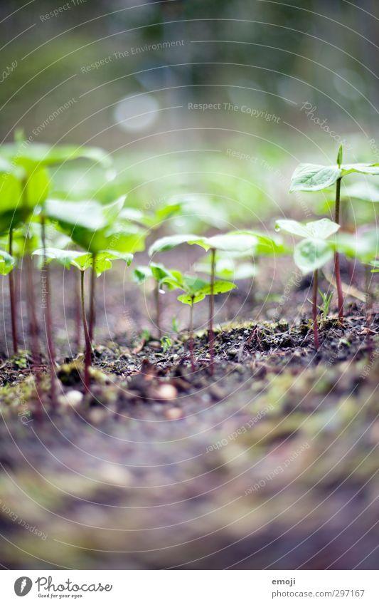 Mini-Welt Natur grün Pflanze Landschaft Blatt Umwelt Frühling natürlich Erde sprießen