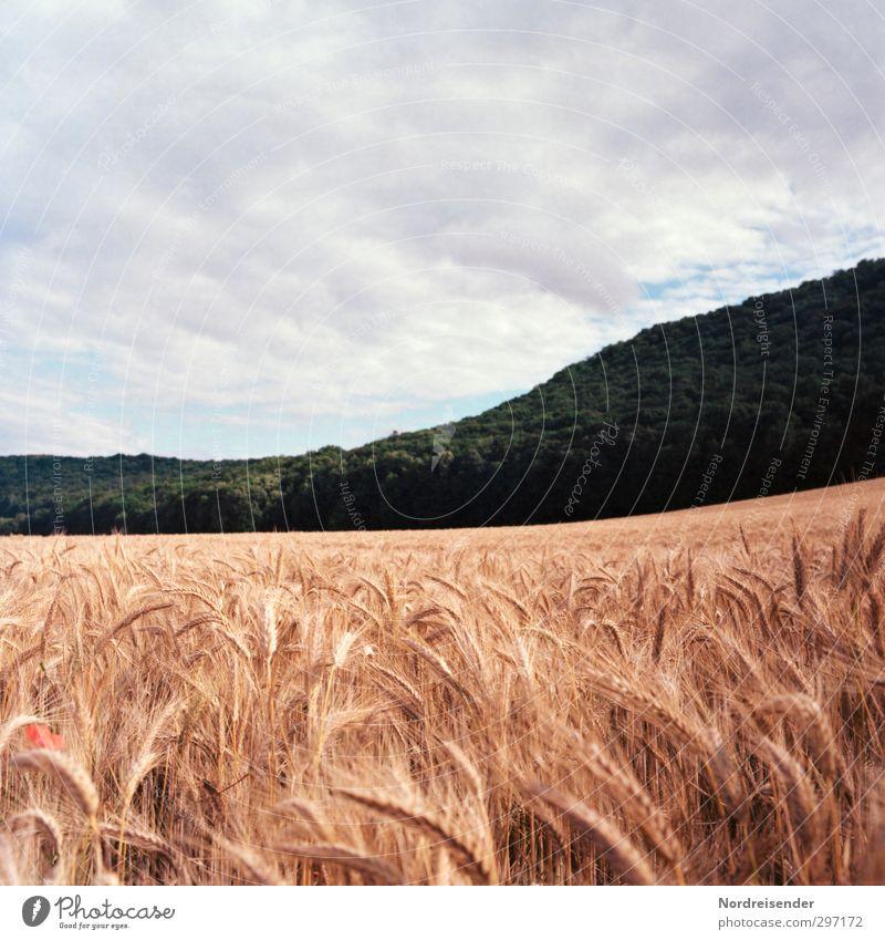 Sommer Lebensmittel Getreide Bioprodukte Sinnesorgane Landwirtschaft Forstwirtschaft Landschaft Pflanze Himmel Klima Wetter Nutzpflanze Feld Wald Hügel Wachstum