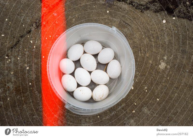 11 Freunde Ei Ernährung authentisch frisch natürlich Eimer ansammeln Bioprodukte Biologische Landwirtschaft Hühnerei Light leak Farbfoto Nahaufnahme