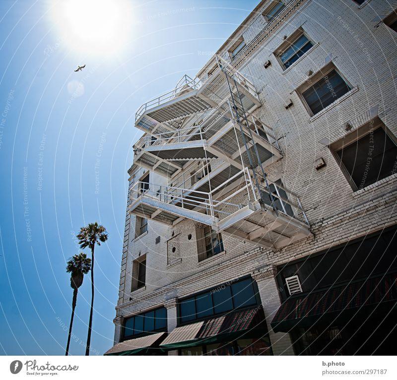 Escape from the Sun palmen Los Angeles Kalifornien Haus Bauwerk Gebäude Architektur Mauer Wand Treppe Feuerleiter Venice Beach Tier Vogel Möve 1 blau Freude