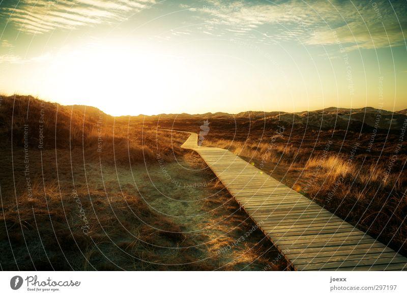 Einklang Himmel Natur Ferien & Urlaub & Reisen blau Sommer Sonne Landschaft Wolken ruhig Wärme Wege & Pfade braun hell Horizont Park Idylle