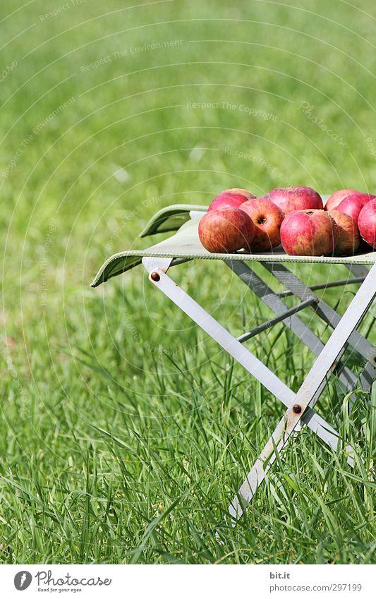 iChair von Apple Natur grün Sommer rot Wiese Leben Herbst Gras Gesunde Ernährung Feste & Feiern Garten Gesundheit Lebensmittel Frucht Freizeit & Hobby