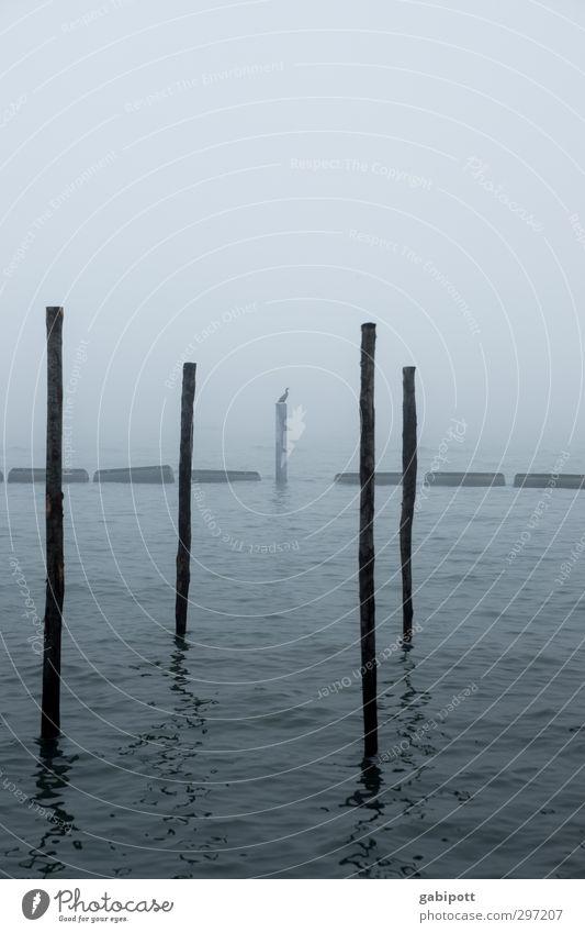 Trübsal mit Vogel Natur Wasser Winter schlechtes Wetter Nebel Küste Meer Venedig Hafenstadt kalt trist blau Einsamkeit Endzeitstimmung Vergänglichkeit